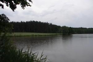 Hofsee 3